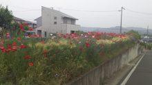 豊川市M様邸外壁塗装工事
